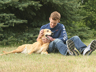 Dog that has received pet ultrasound near Williamston, MI
