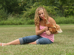 Rooster that has received animal laboratory services near Williamston, MI