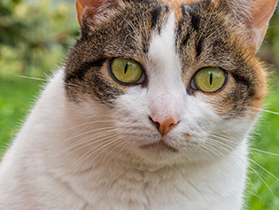 Veterinary Client Forms in Williamston: Cat in a field