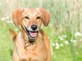 Pet Safety Tips in Williamston: Happy dog in grass