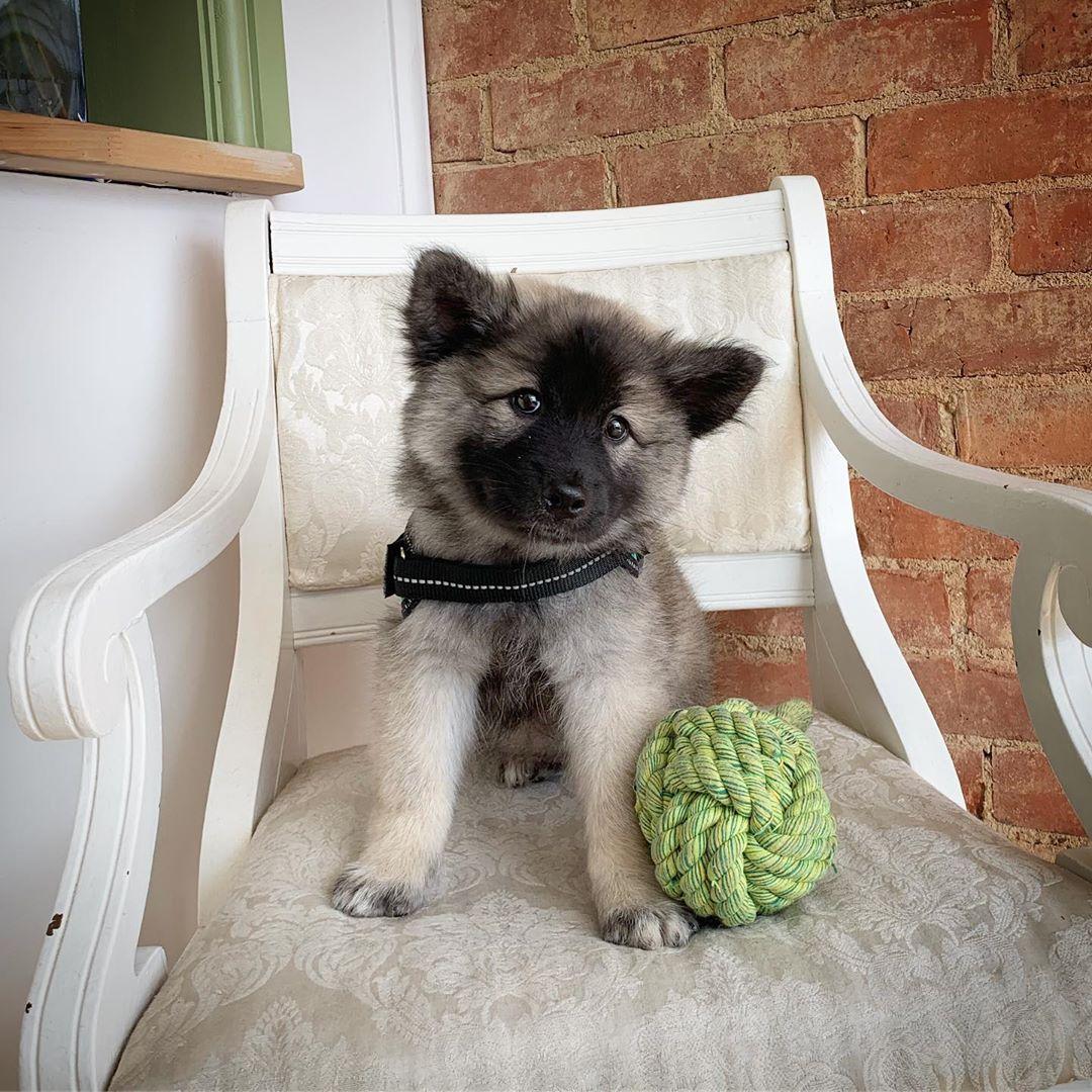Puppy Pamper