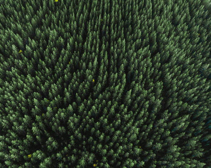 Top view of green woods