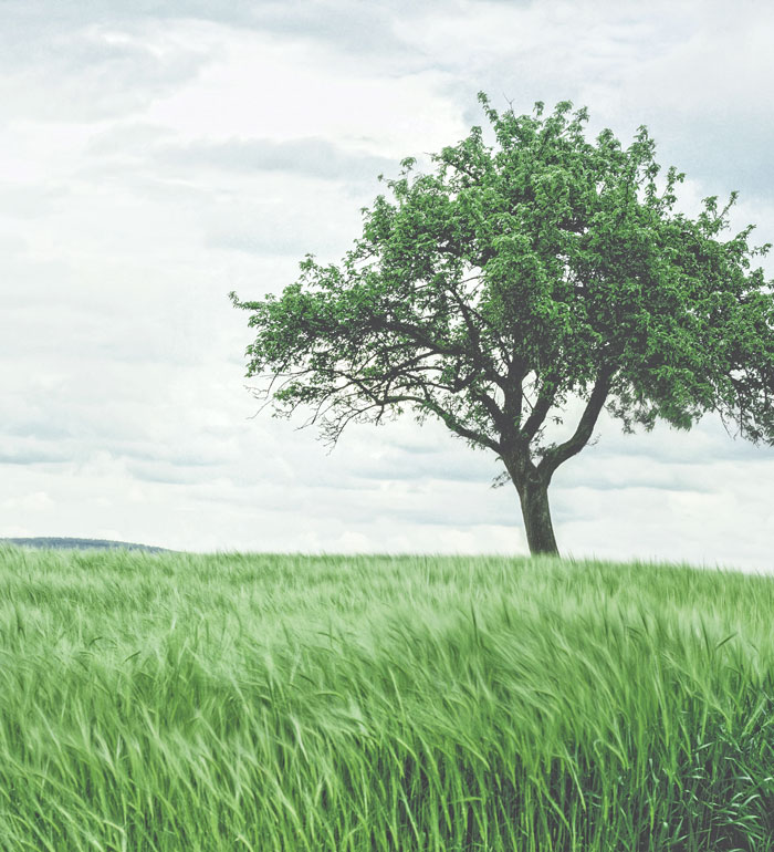 tree on green grass