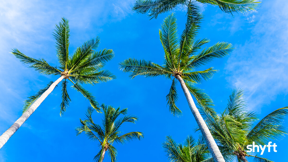 Looking up at palm trees against a blue sky