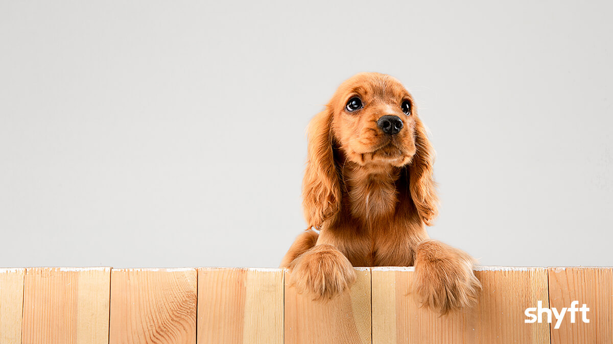 A cute puppy looking to the side with their paws over a wooden fence