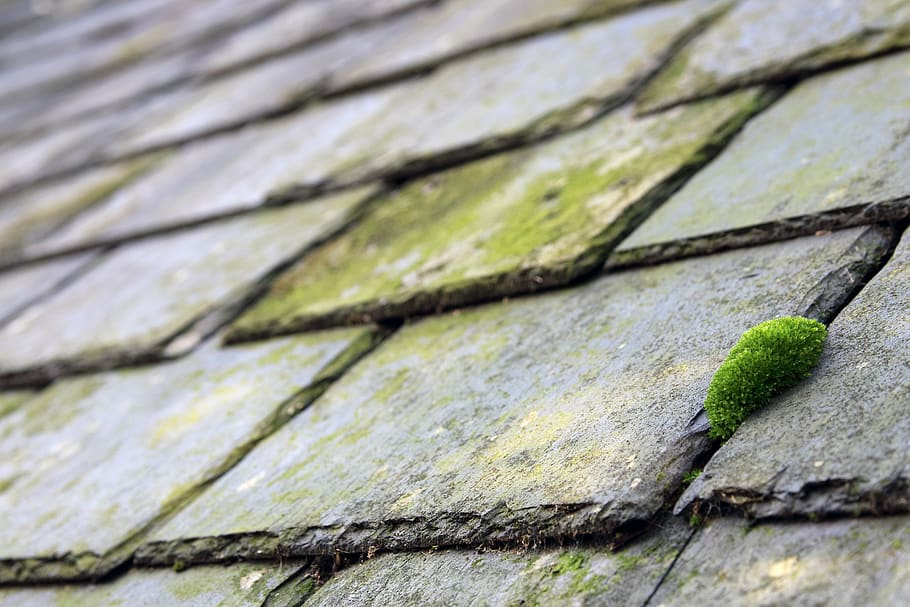 slates-moss-building-old-roof-roofing.jpg