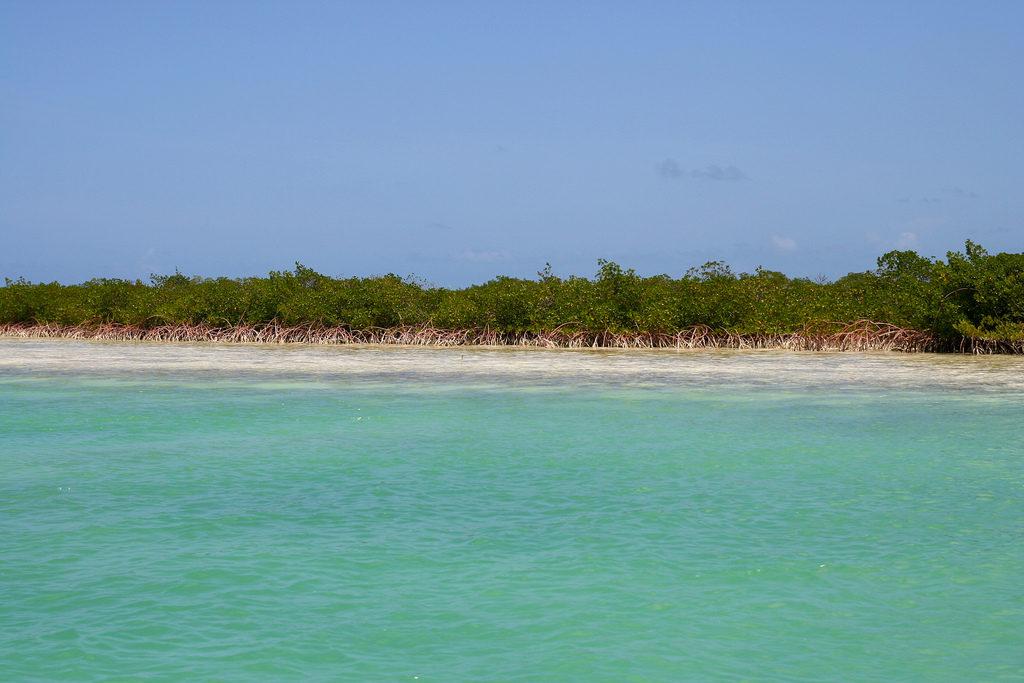 mangrove turks and caicos