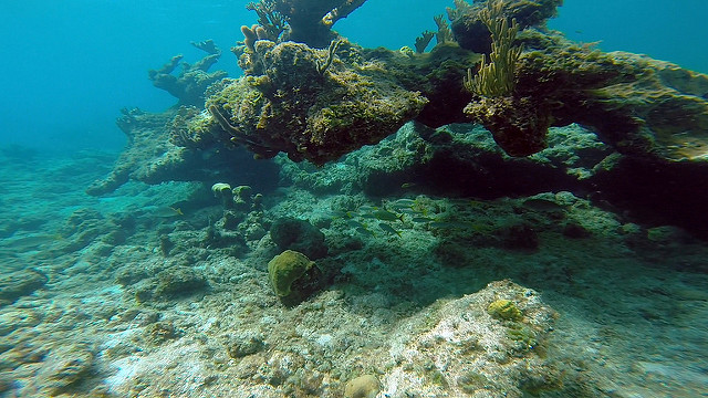 pine cay reef