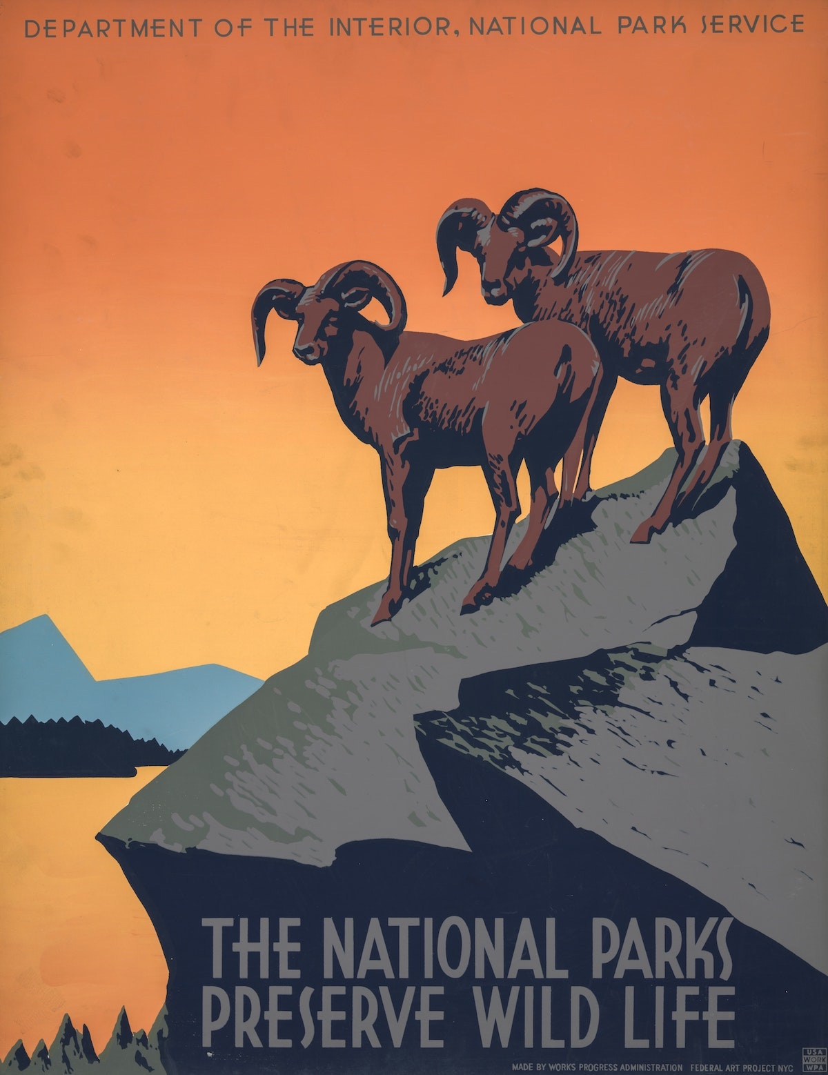 The National Park Wild Life