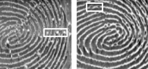 Left: Sensor read of spoof finger with white air bubbles, but fewer minute Details. Rright: Sensor read of real finger with minute details but no air bubbles.