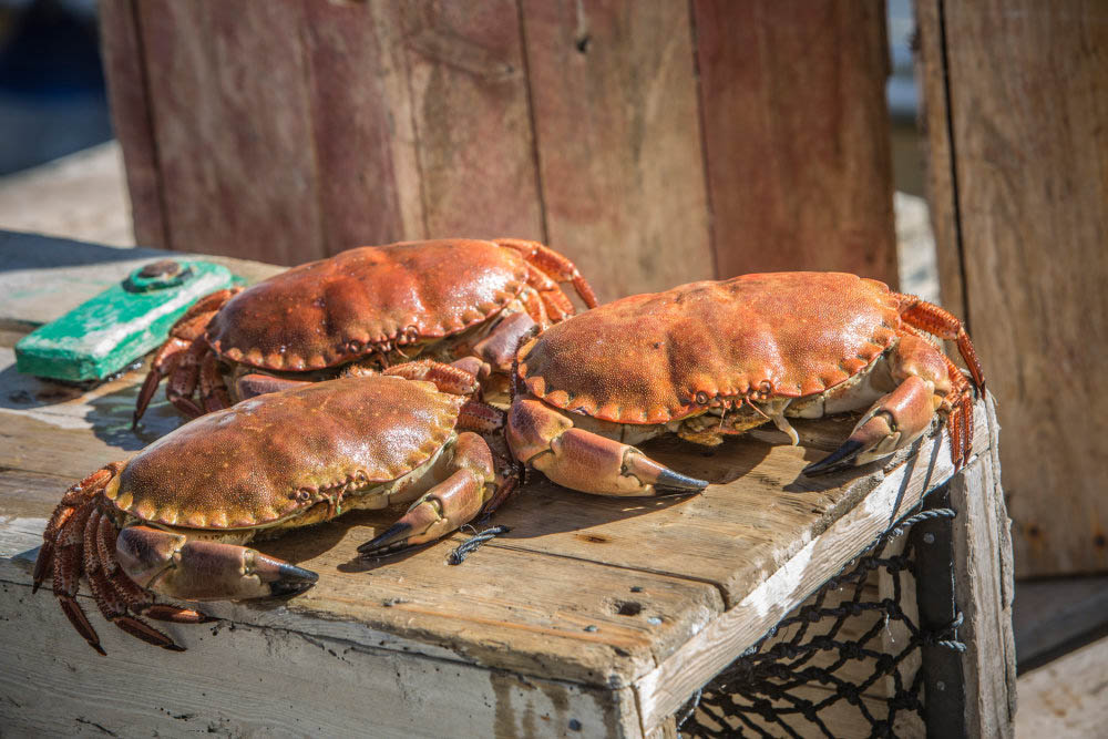 Picture of three crabs