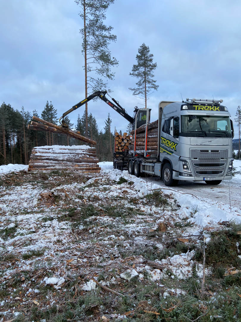 Trekk Tømmer - 004
