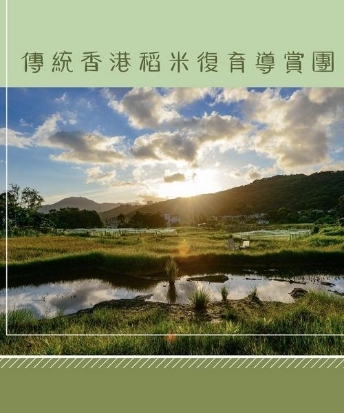 大地予我 傳統香港稻米復育導賞團