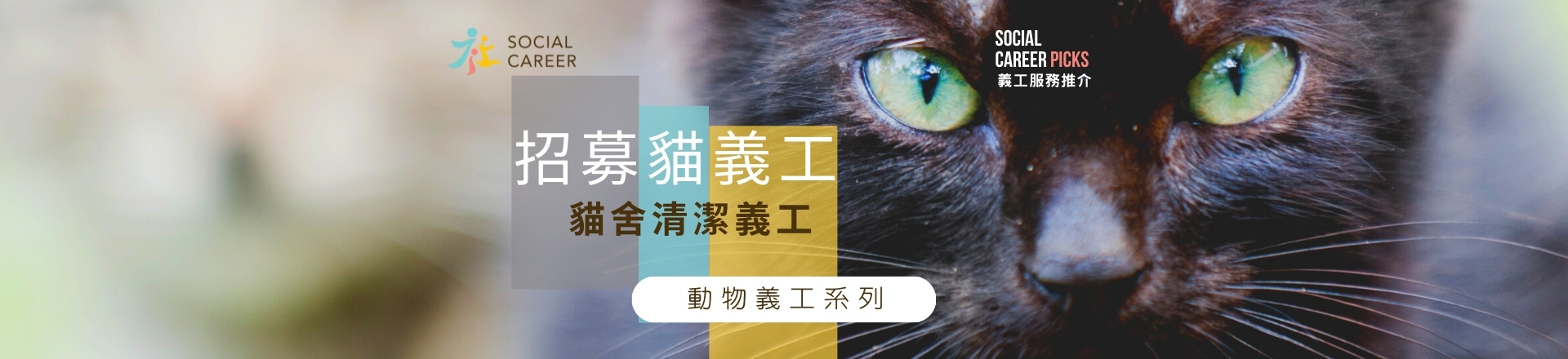 動物義工系列之貓義工招募
