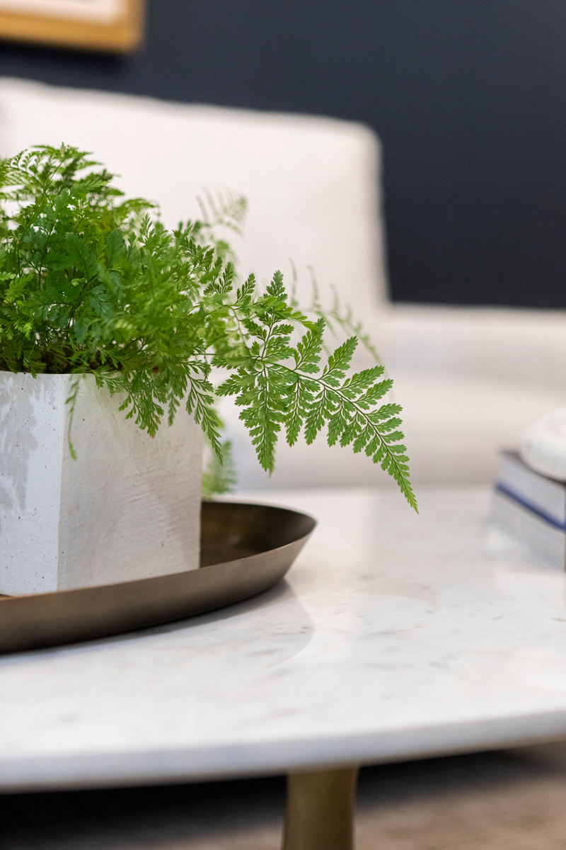a fern on a table at Allium Financial