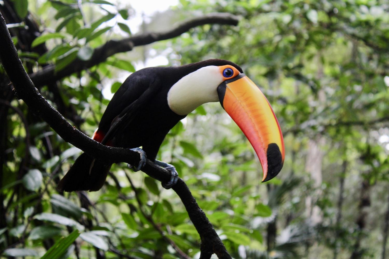Expats teaching in Brazil get to enjoy its enchanting wildlife