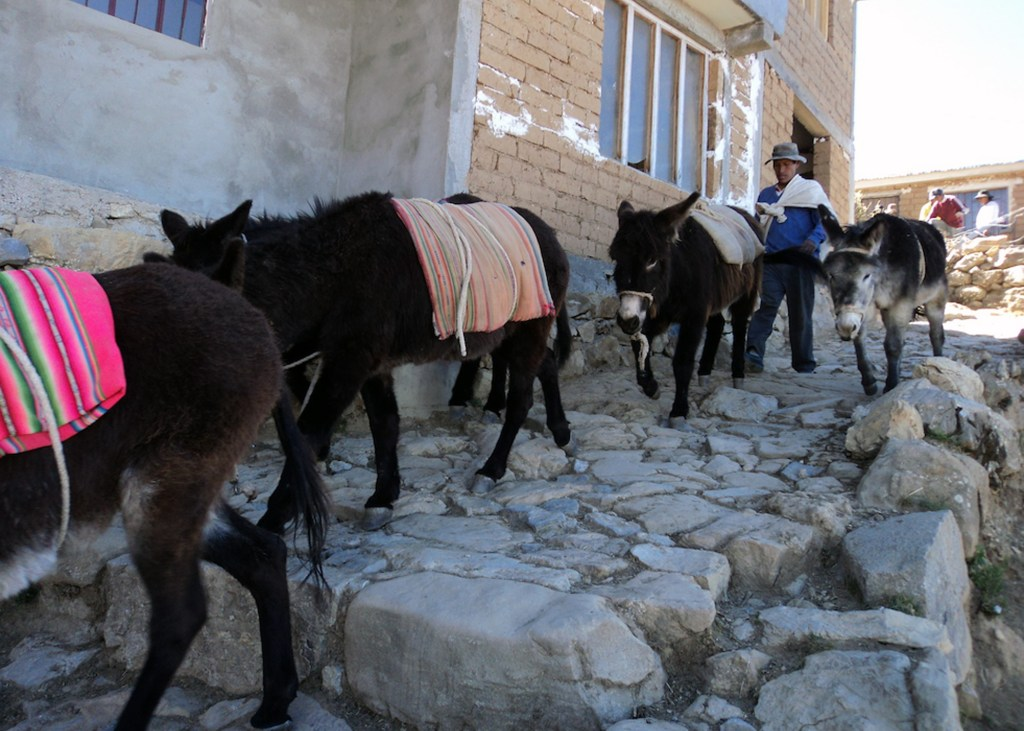 ESL teacher Fran had a great time on her backpacking trip in Bolivia