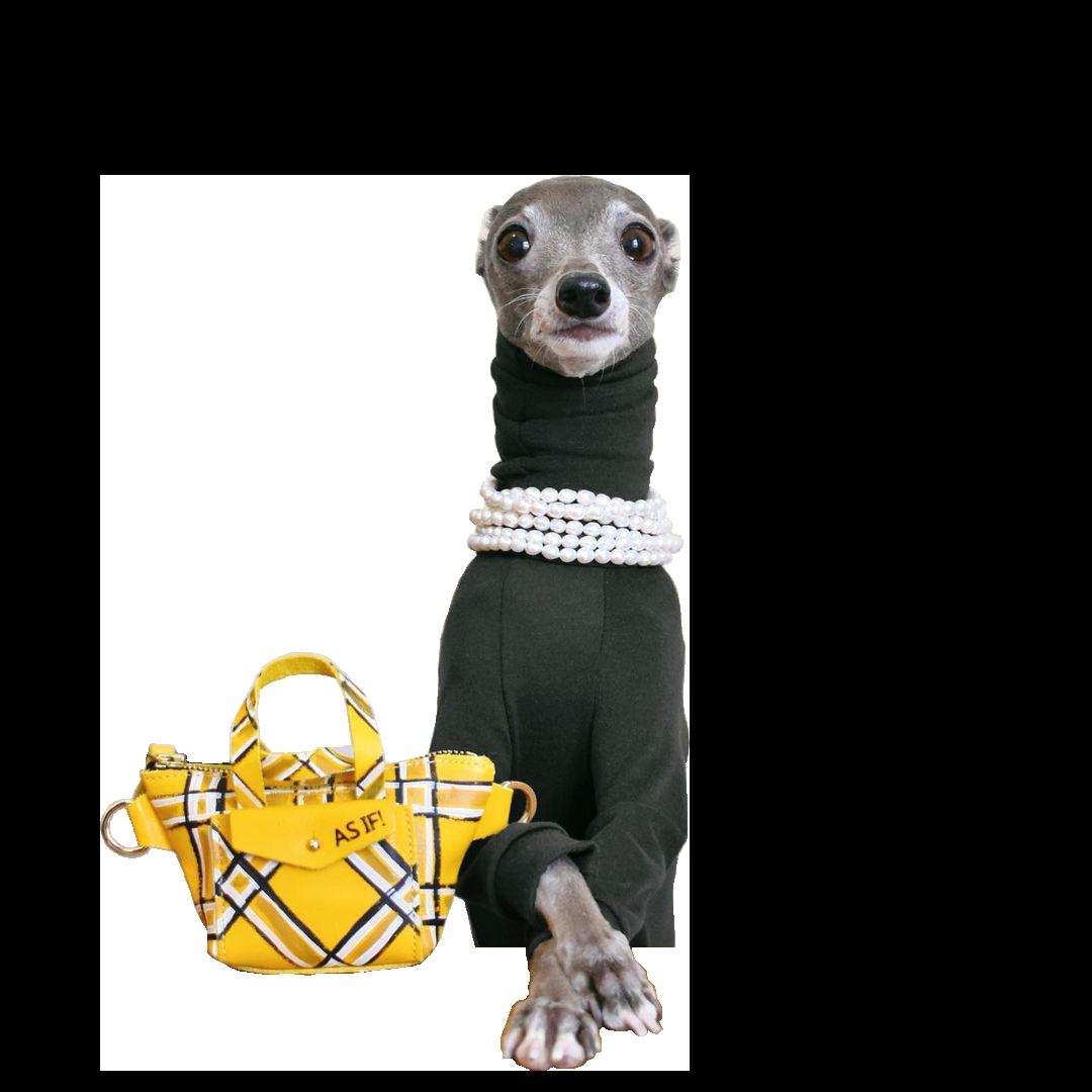 Tika the Iggy posing in a black turtle neck sweater with yellow plaid handbag