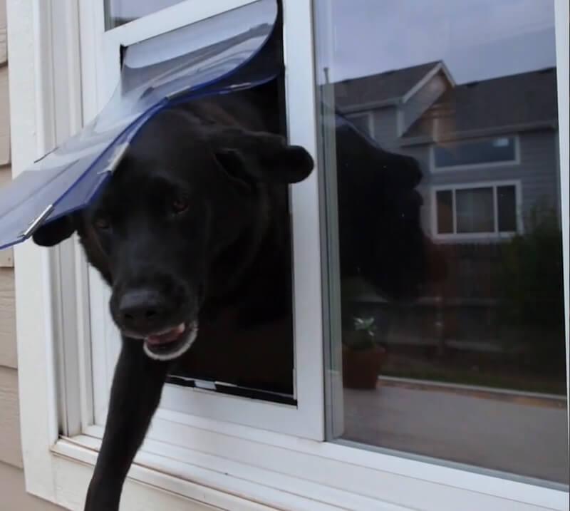 happy dog entering doggie door
