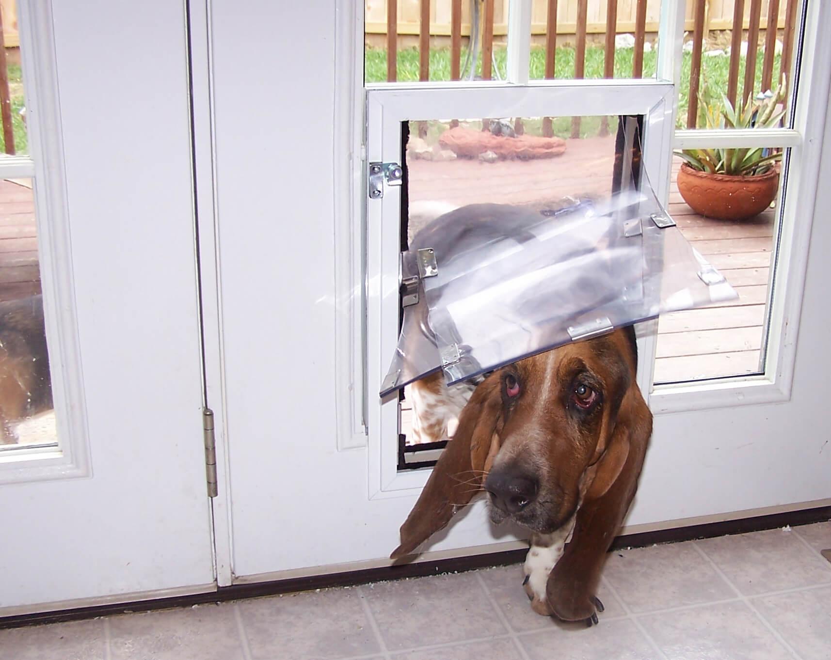 dog entering in-glass doggie door