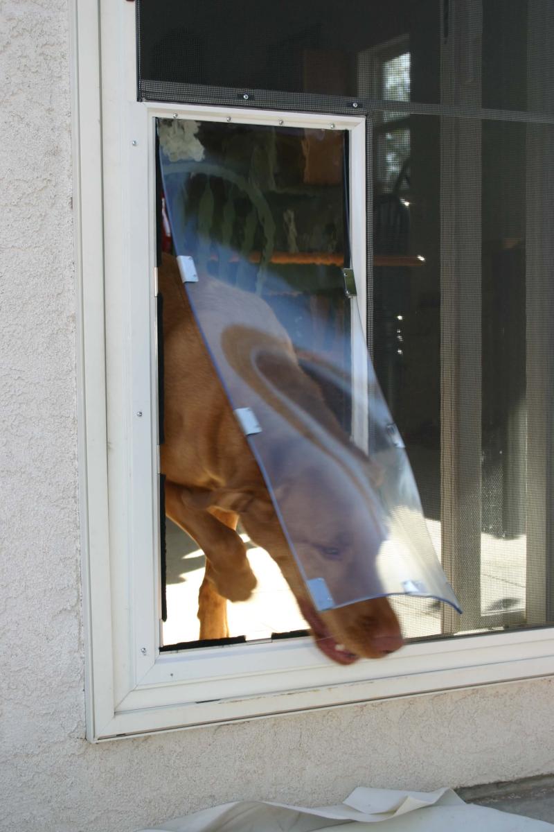 dog entering single pane doggie door