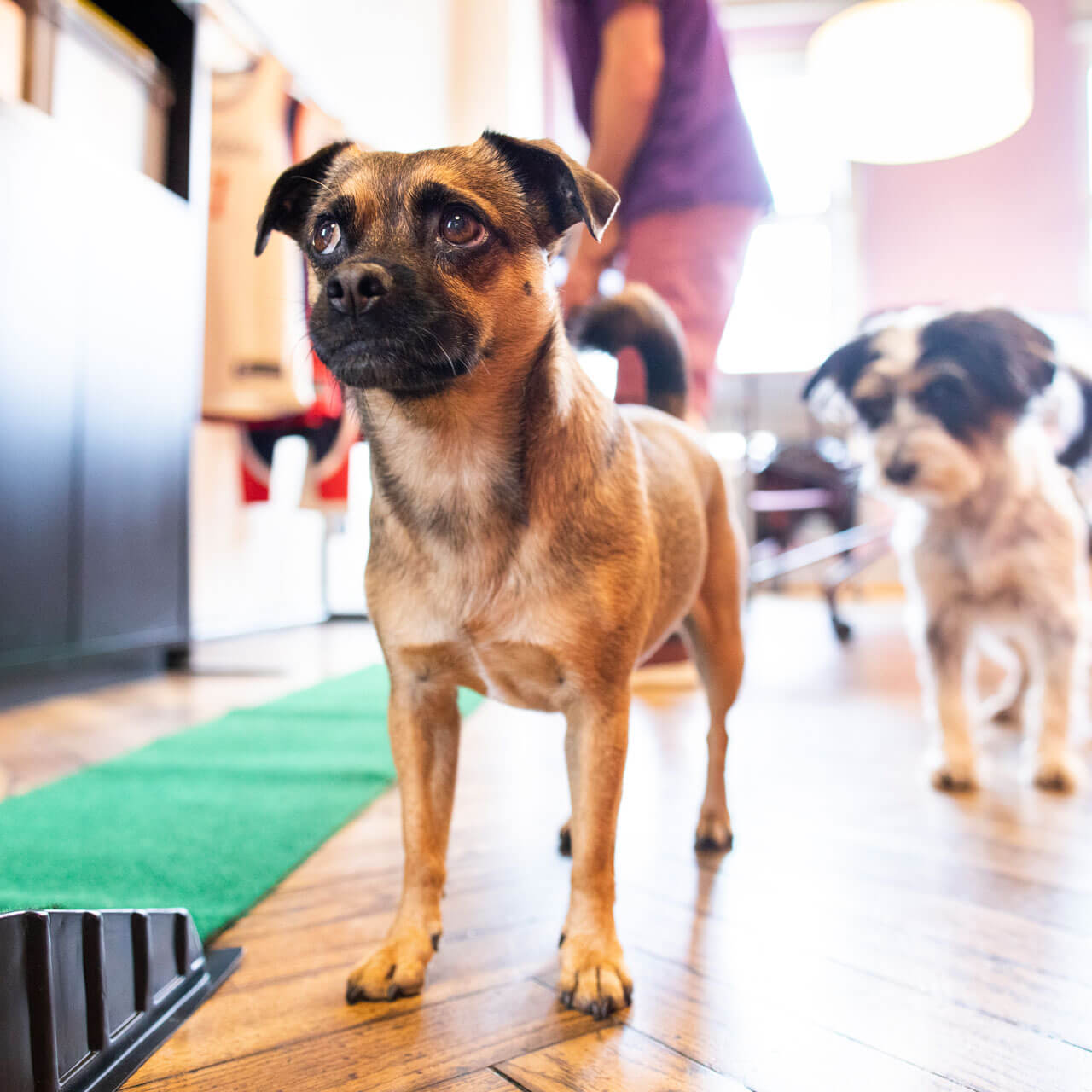 Büroalltag bei Schröder+Schömbs PR: Hunde im Office.