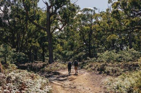 Aussie bush.jpg