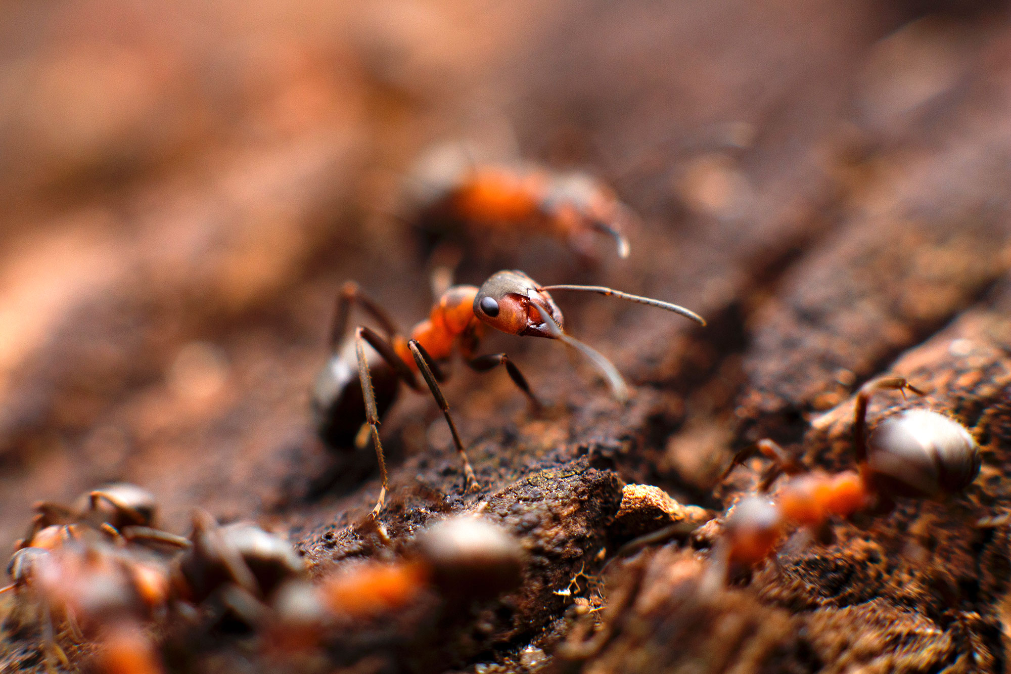 Multiple ants crawling around