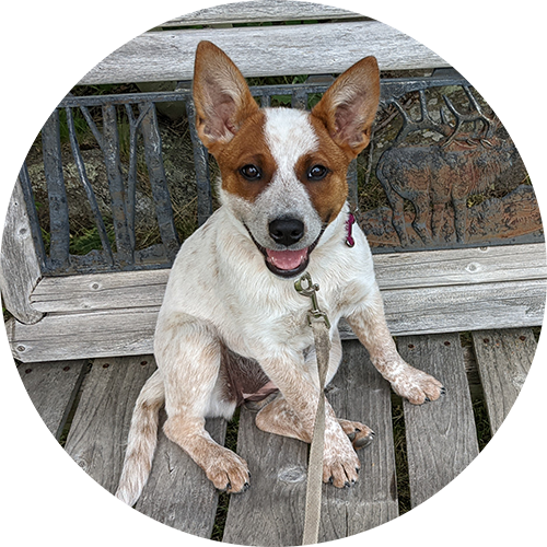 Parker Wood, partner at Webhound Marketing