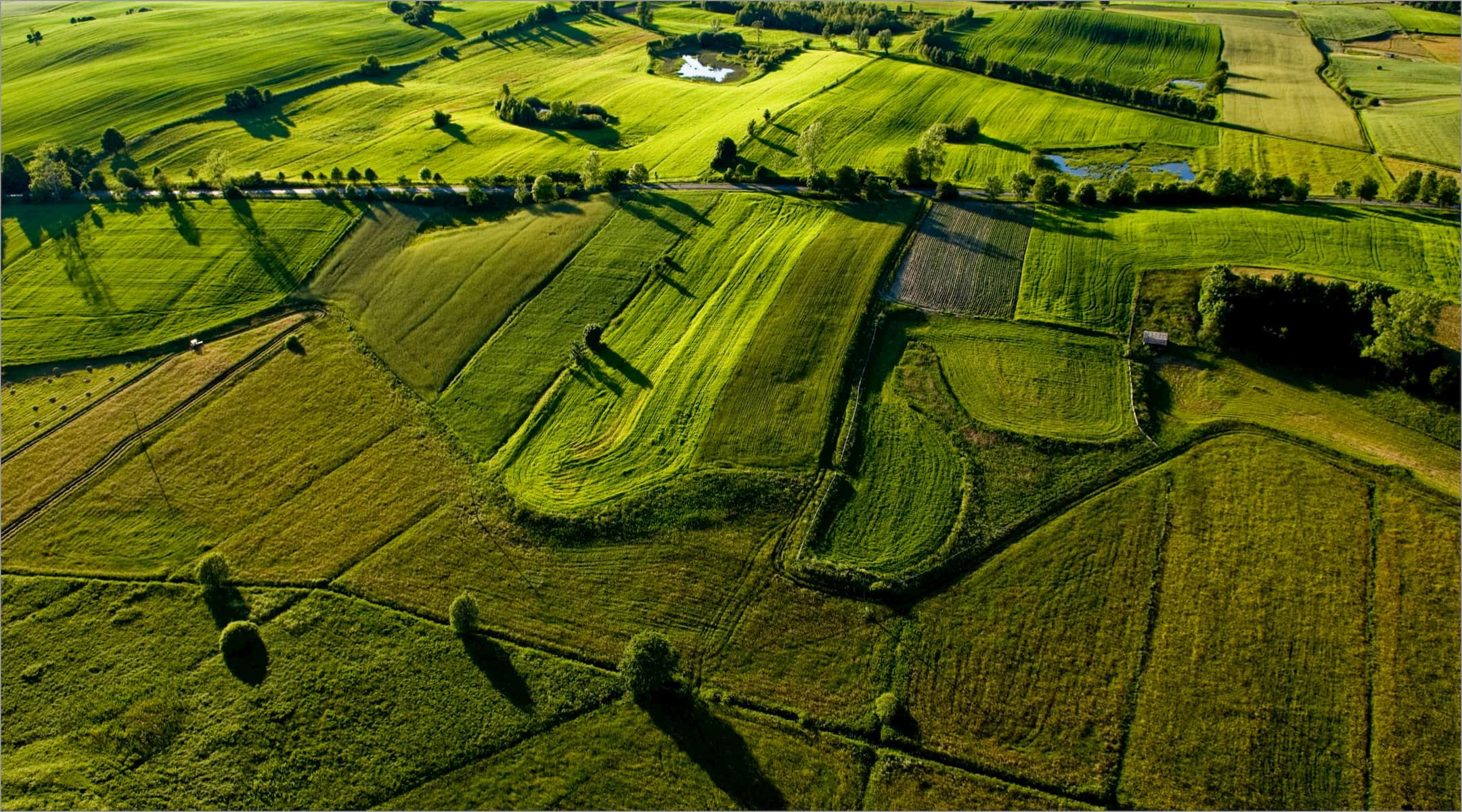 a green farm field