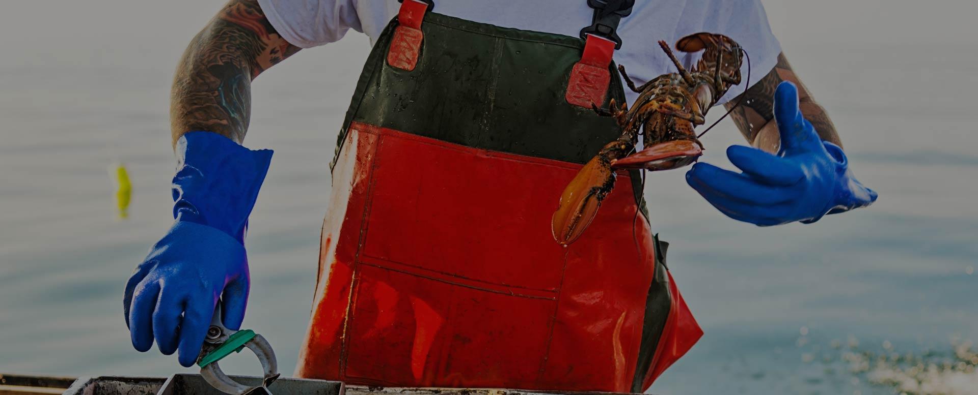 fresh wholesale lobsters