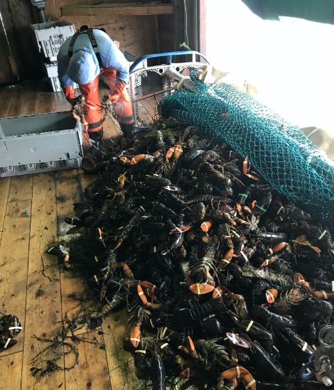 commercial lobster fishing