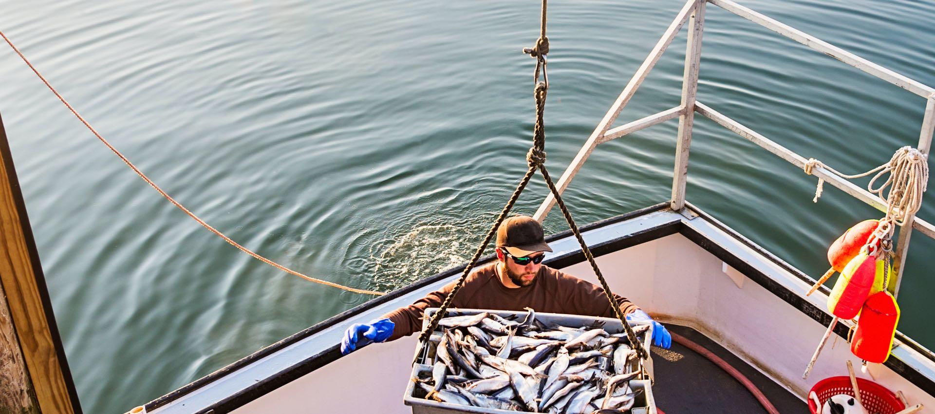 New England wholesale seafood sales