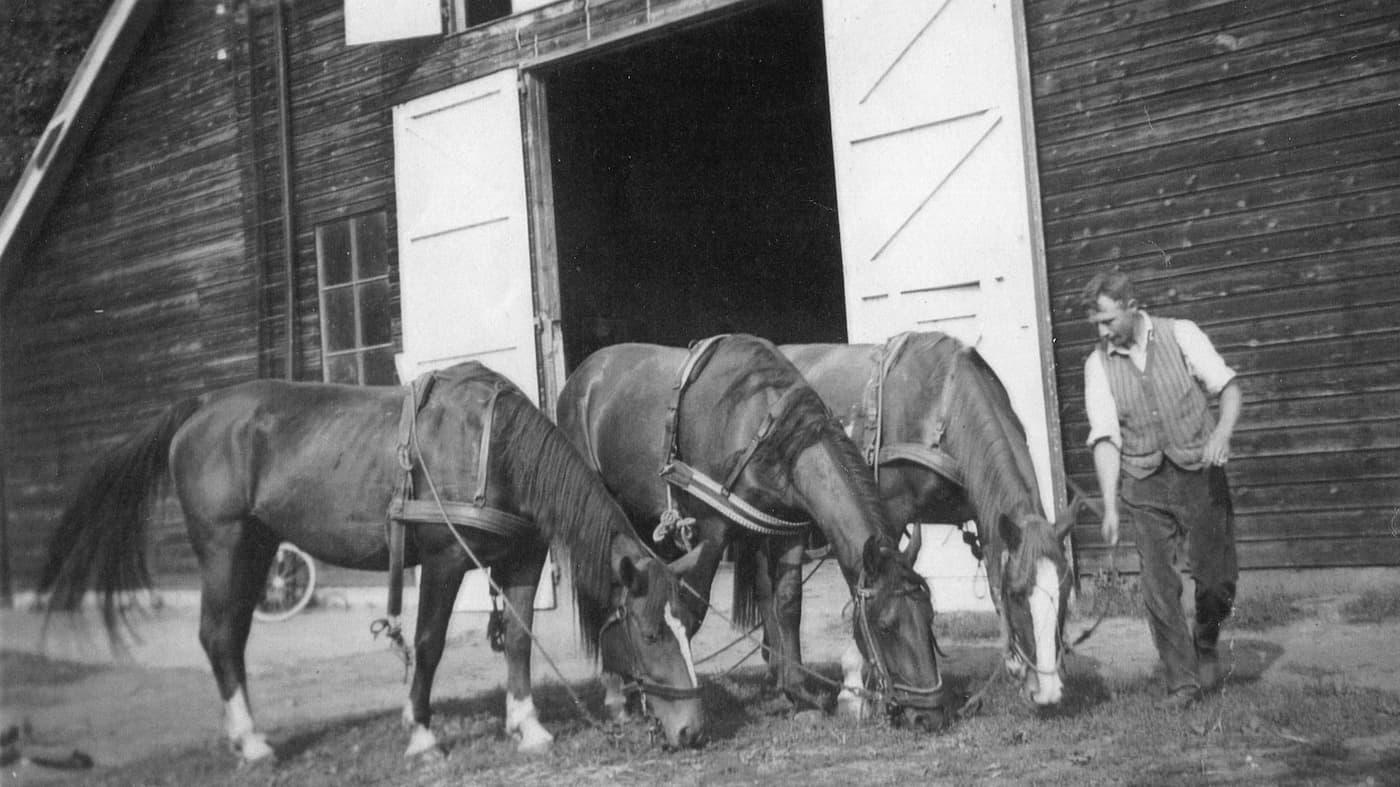Louis met zijn paarden Tofla, Astrid en Charlotte (foto familie de Bruijn)