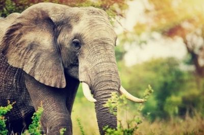 Scalable Mass Coupon Distribution or How to Eat a Herd of Elephants?