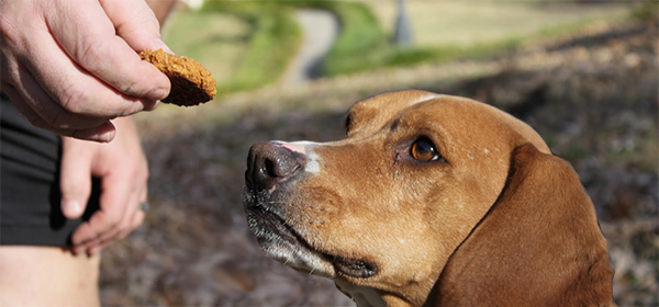 dog with treats and nutrition