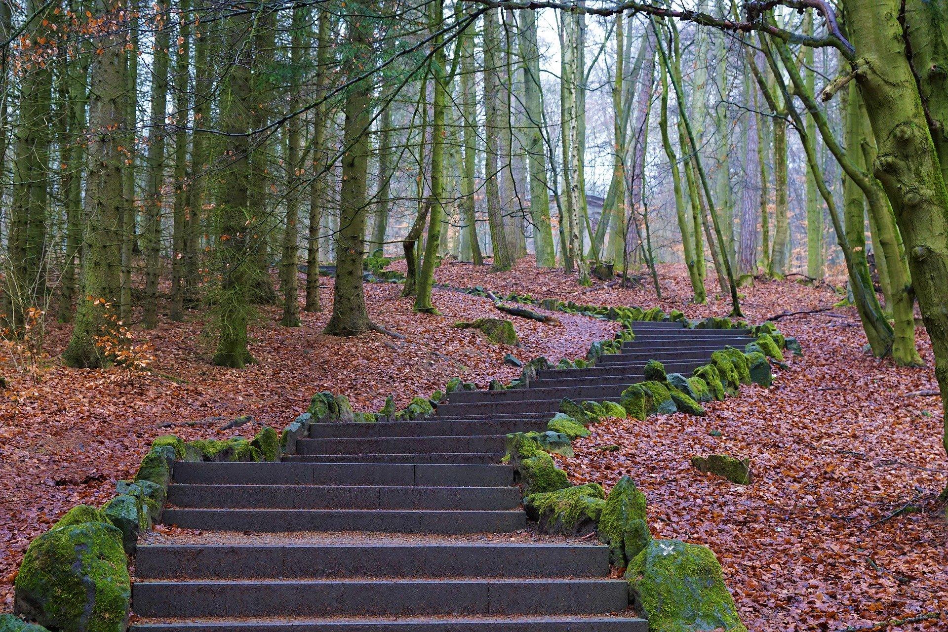 """Arrangement """"Wandern im Habichtswald"""""""