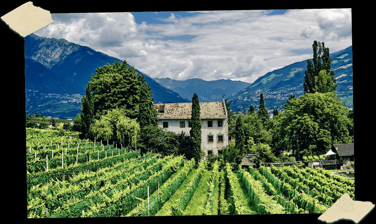 Scrapbook image of Italian vineyard