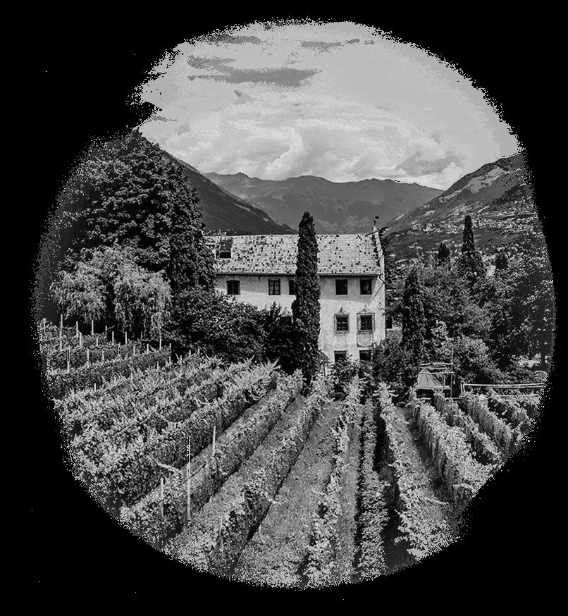 Black & white Italian vineyard