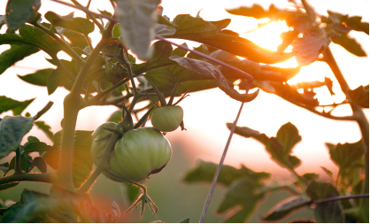 Five benefits of a circular economy for food