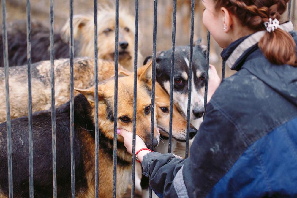 Tapkite savanoriu gyvūnų prieglaudoje