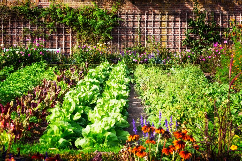 Ekologiškas ūkis