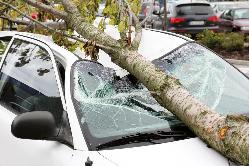 tree fallen onto a windshield