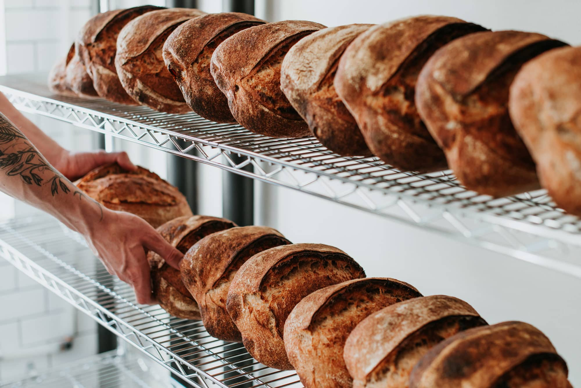 Image of loaves on a rack