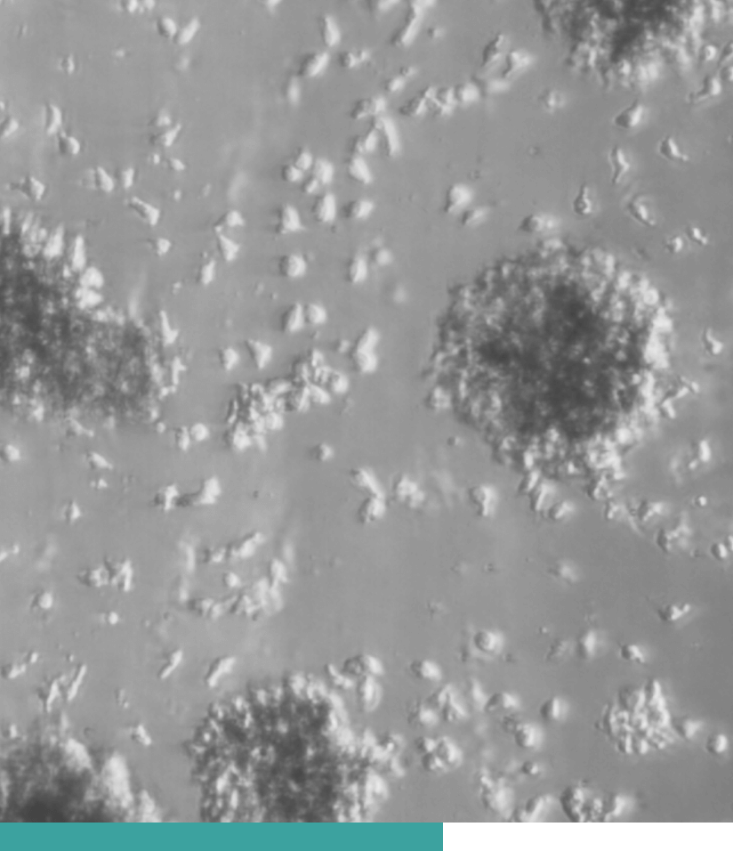 a mircoscopic view of some molecular cell substance
