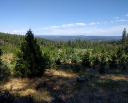camptonville project site