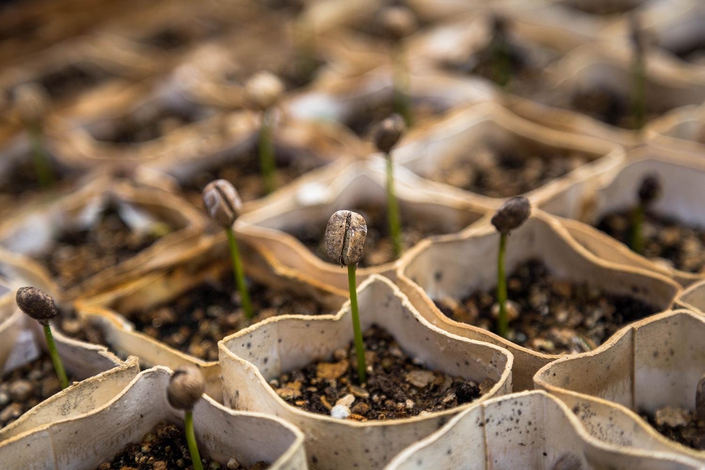 Seed Financing