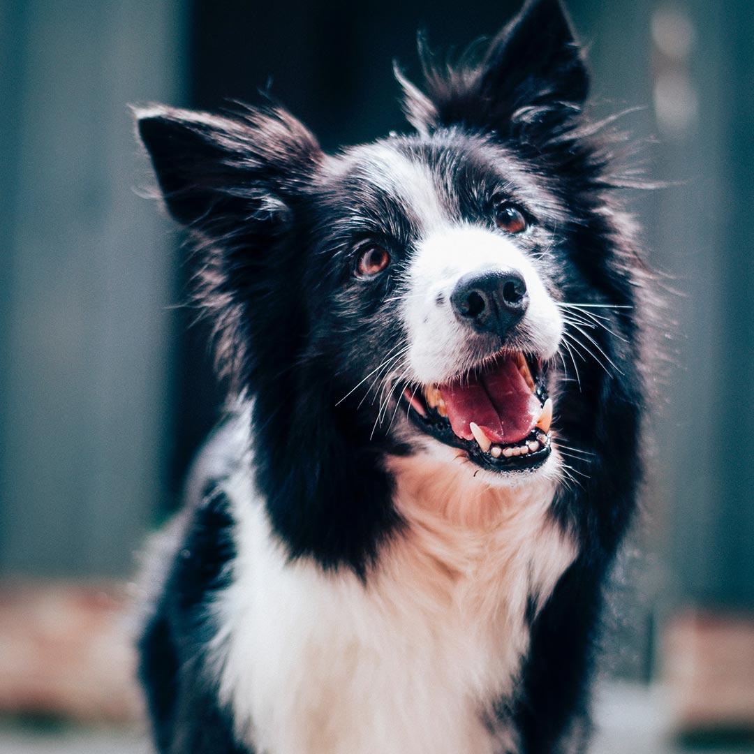 Therapie mit Hunden bei Autimsu