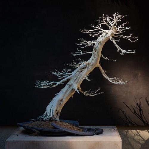 A defoliated bonsai tree leaning dramatically in a pot.