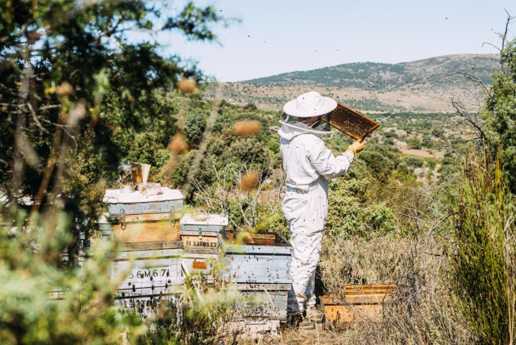 Пчелар, грижещ се за своите пчели